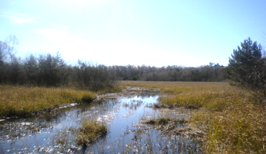 Wetlands at Gotland island to promote aquifer (groundwater) recharge.