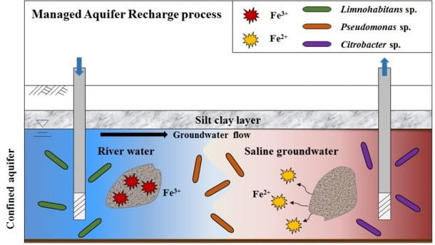 Graphical abstract for the paper investigating Fe in residual groundwater (Ko et. al, 2016, Sci. Tot. Environ)