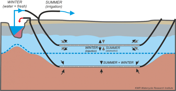 Cross-section of the Freshmaker technique applied in a shallow fresh groundwater lens within a saline groundwater aquifer